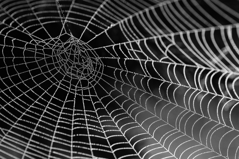 Caught In A Spider's Web